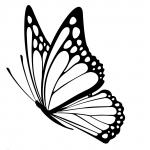 Kukkakauppa Stenius logo - perhonen